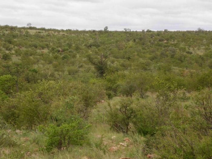 Krüger Nationalpark (Südafrika)